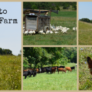 visit to polyface farm